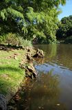 River bank. With overhanging trees Stock Photos
