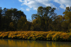 River bank in autumn. Yellow bushes Royalty Free Stock Photos