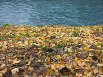 River bank in autumn Royalty Free Stock Photo