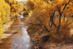 River bank in autumn time Stock Photos