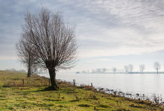 At the river bank early in the morning Royalty Free Stock Photos