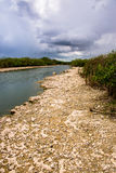 River bank at Everglades National Park. In Summer when the rain is coming Stock Image