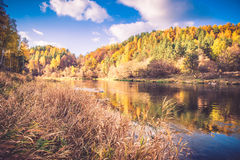 River bank in fall Stock Images