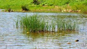 River bank, fresh water stream (4K) stock footage