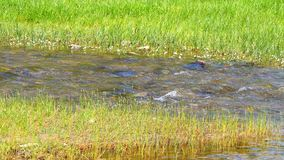 River bank, fresh water stream (4K).  stock footage