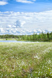 River bank in marshy evergreen forests Stock Images