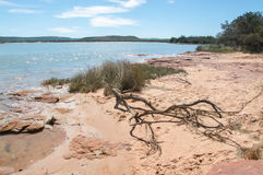 River Bank: Murchison River Stock Photography
