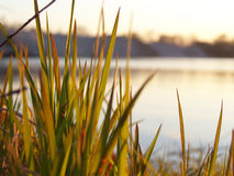 River bank. Shined grass Royalty Free Stock Photography