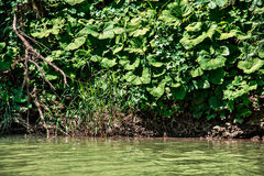 River Bank. The steep Bank of the river in the green grass Royalty Free Stock Images