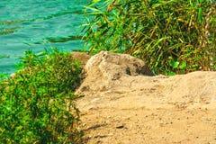 River bank of stone. Riverbank, summer vacation, ancient stone, wildlife Royalty Free Stock Photos