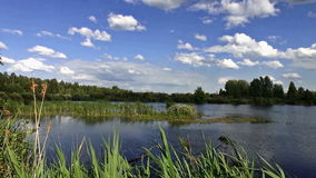 The river Bank on a Sunny summer day stock video footage