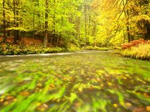 River bank under fall trees at mountain river. Fresh autumnal air in the evening after rainy day,. Mossy boulders, rain drops on light green fern royalty free stock image