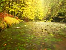 River bank under fall trees at mountain river. Fresh autumnal air in the evening after rainy day,. Mossy boulders, rain drops on light green fern stock image
