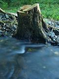 River bank under stump at mountain river with high level close to flood. Stock Images