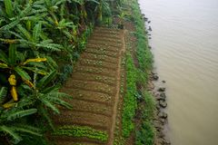 River coast village asia province agriculture royalty free stock image