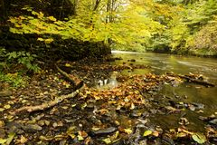 River banks with fall colors. Banks of river through forest with fall colors on sunny day Stock Photos