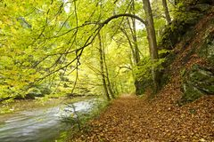 River banks with fall colors. River banks through forest with fall colors on sunny day Stock Photography