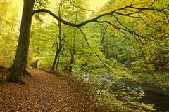 River banks in forest in fall Royalty Free Stock Photography