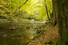 River banks in forest in fall. River banks lined with fall foliage in sunny forest Stock Image