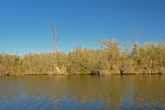 Guadalhorce river banks with reed and shrubs on a sunny day with clear blue sky. River banks of Guadalhorce with reed and shrubs on a sunny day with clear blue Stock Photo
