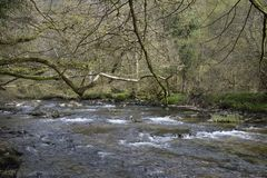 River Barle Stock Photo