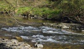 River Barle Royalty Free Stock Photo
