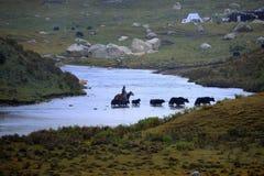 A River in Bayankala mountains Royalty Free Stock Photo