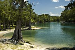 River Beach. The beach on the Santa Fe River near Branford, Florida Royalty Free Stock Images