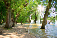 River Beach Under The Trees Stock Photography