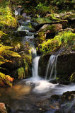 The river Bear Creek Stock Image