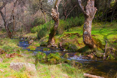 River. Beautiful river in the forest. Despeñaperros Natural Park, Andalusia, Spain Royalty Free Stock Photos