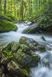 River in Beautiful Forest Stock Photography