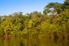 A river and beautiful trees in a rainforest Peru.  Stock Image