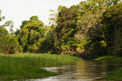 A river and beautiful trees in a rainforest Peru Stock Images