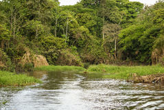 A river and beautiful trees in a rainforest Peru Royalty Free Stock Images