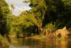 A river and beautiful trees in a rainforest Peru Royalty Free Stock Image