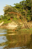 A river and beautiful trees in a rainforest Peru Royalty Free Stock Photos