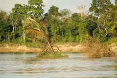A river and beautiful trees in a rainforest Peru Royalty Free Stock Photo