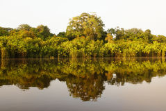 A river and beautiful trees in a rainforest Peru Royalty Free Stock Photography