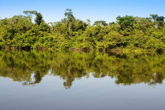 A river and beautiful trees in a rainforest Peru Stock Image