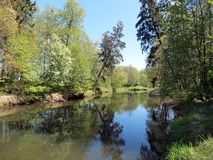 River and beautiful trees in spring, Lithuania Royalty Free Stock Image