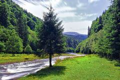 River Bed. Mountain river bed landscape with green pine forest Stock Photography