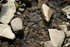 River bed. Old river bed with fresh clear water Stock Photos