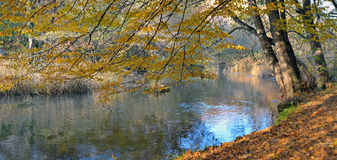 River in beechen autumn wood Royalty Free Stock Photos