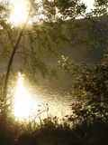River behind the trees. At sunset stock photos