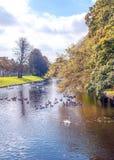 River of Belgium Stock Images