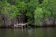 The river Bentota among the Jungle. Royalty Free Stock Images