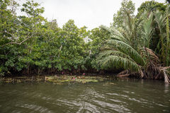 The river Bentota among the Jungle. Royalty Free Stock Photography