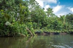 The river Bentota among the Jungle. Royalty Free Stock Photos