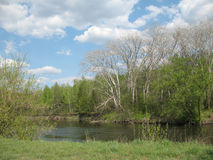 River. Birch forest on the riverside, green grass and blue sky Royalty Free Stock Photos